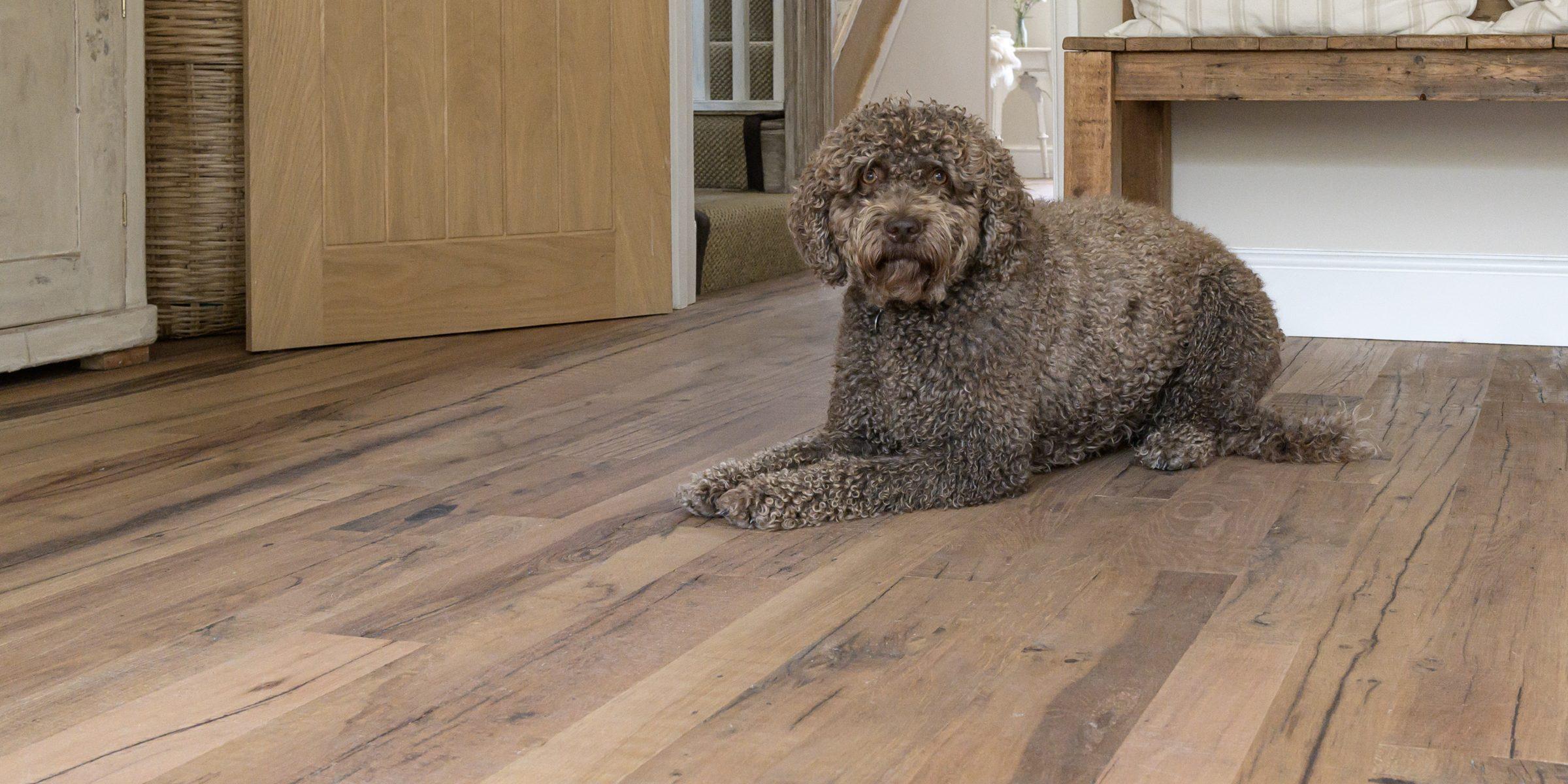 dog on reclaimed wood floors